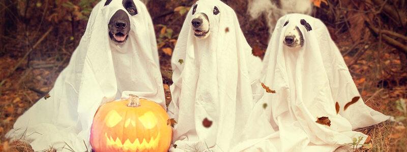 Ghosting: Customer Service Skills?